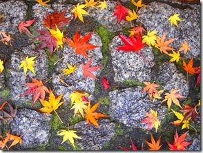 楓の落葉[4]